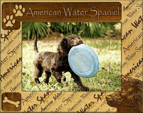 Frame - American Water Spaniel