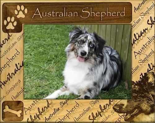 Frame - Australian Shepherd