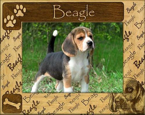 Frame - Beagle