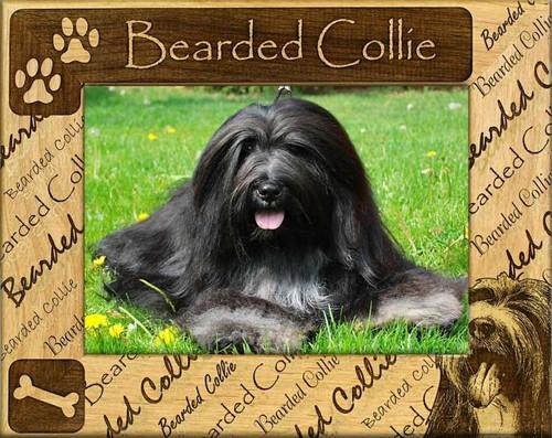 Frame - Bearded Collie