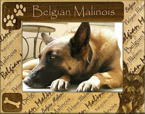 Frame - Belgian Malinois