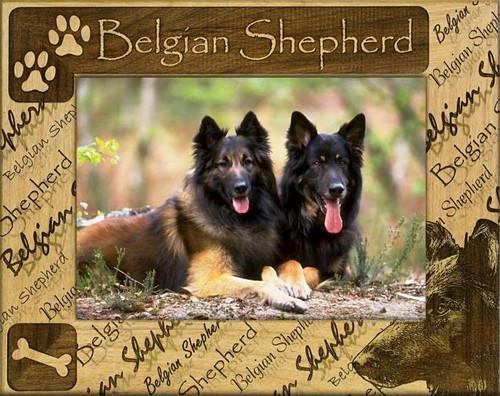 Frame - Belgian Shepherd