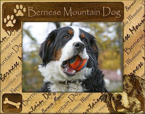 Frame - Bernese Mountain Dog
