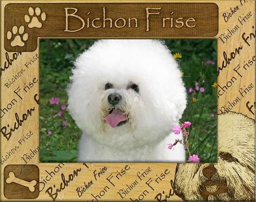 Frame - Bichon Frise