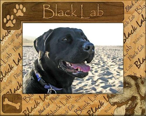 Frame - Black Lab - DBA0023
