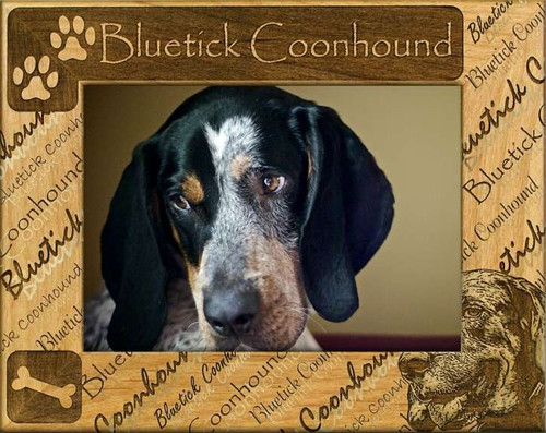 Frame - Bluetick Coonhound