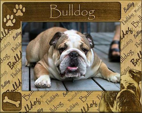 Frame - Bull Dog