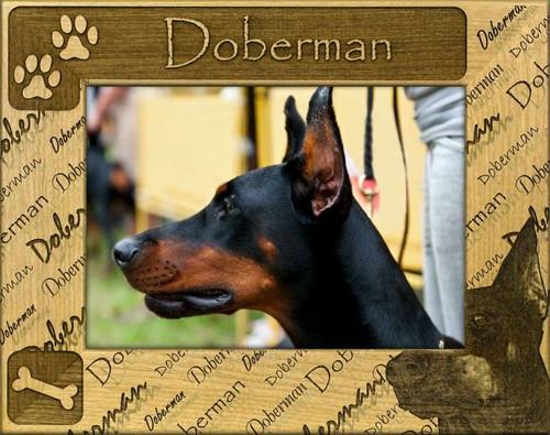 Frame - Doberman