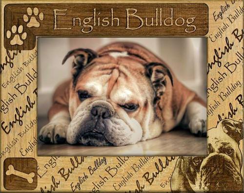 Frame - English Bull Dog