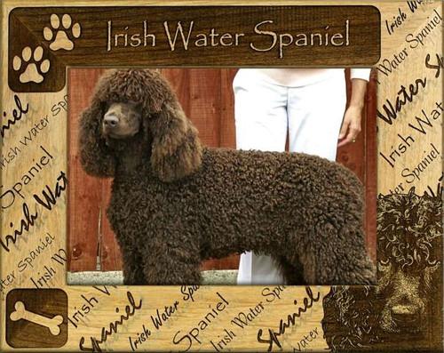 Frame - Irish Water Spaniel