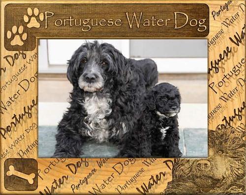 Frame - Portuguese Water Dog