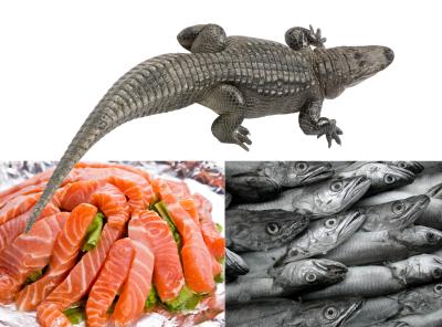 Alligator and seafood dog treats
