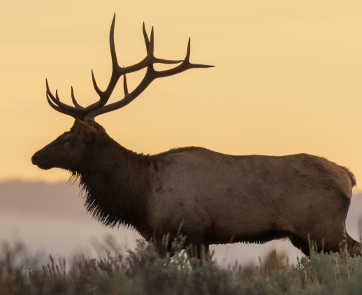 All natural dog treats made from elk, deer, venison and moose.