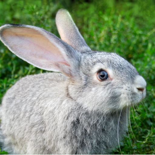 Hypoallergenic dog treats made from free range rabbits.