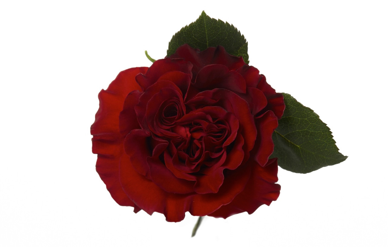 Garden Rose Hearts Dbec Wholesalecom