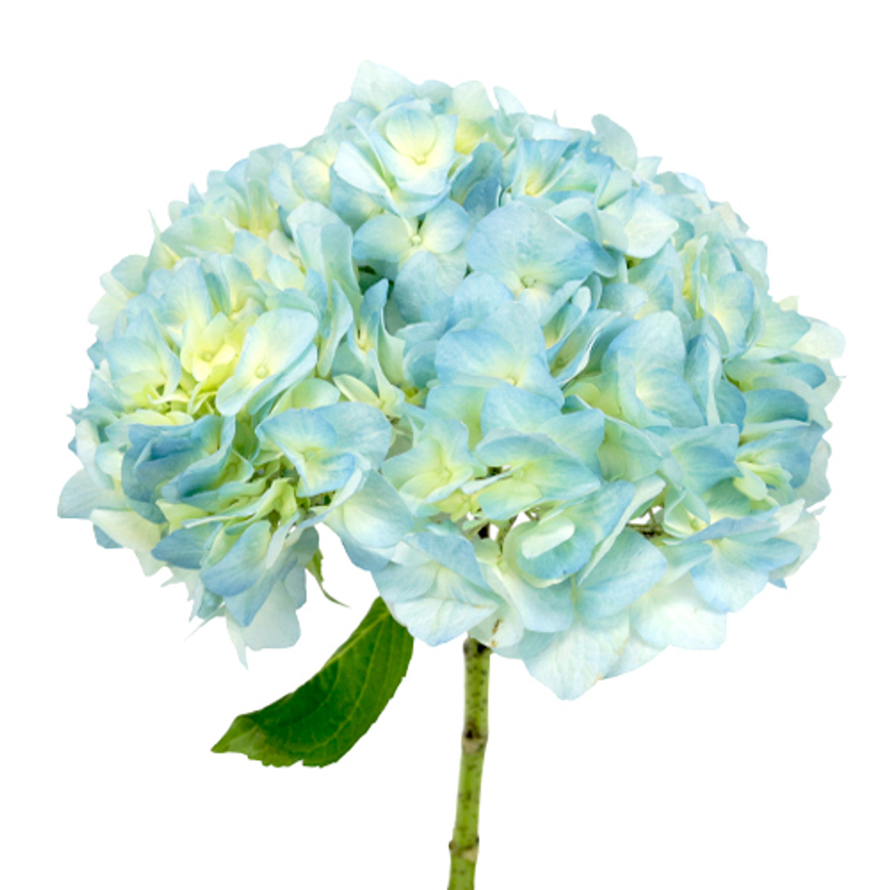 Hydrangea Light Blue Dbec Wholesale Com
