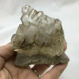 BiColored Elestial Smokey Quartz 100mm 256g 1901-340 Mineral Crystal