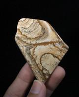 DeShutes Free Form Picture Jasper Cabochon 55mm 170908 Brown Tan Stone Jewelry