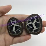 MeldedMind087 Sliced Septarian Nodule 46mm Morocco Specimen Mineral Decor