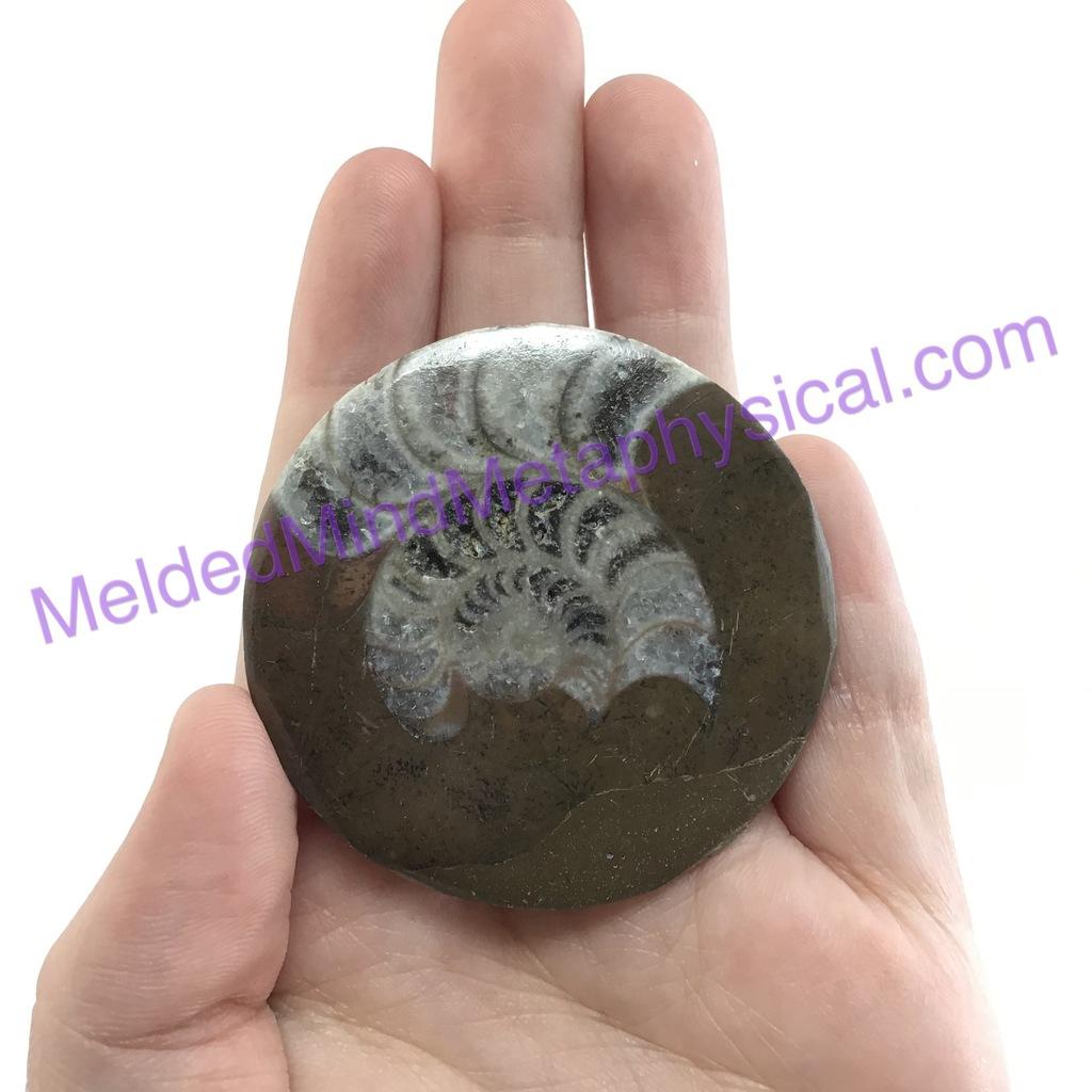 fossil-cab.jpg