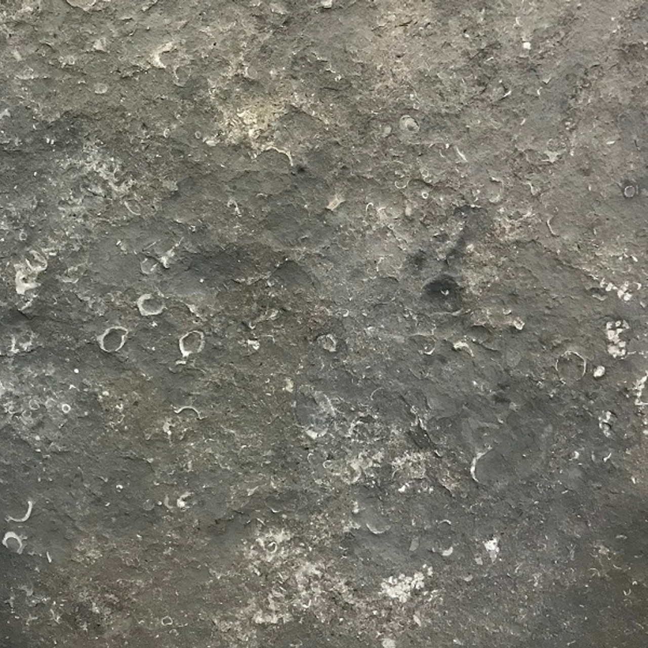 Plaza Gray limestone thermal/flamed finish
