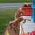 Rearing Horse Garden Stake - 1024