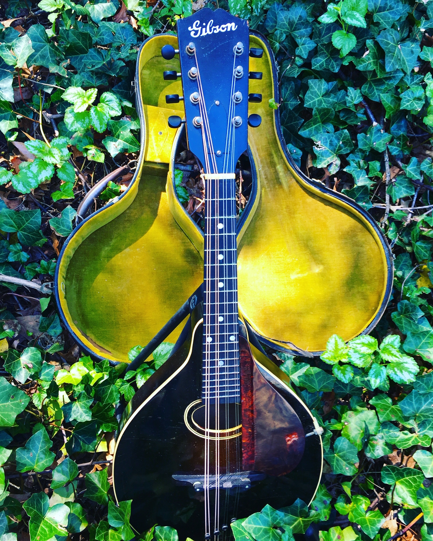 Mandolin in foliage | Acoustic Corner | Black Mountain, NC
