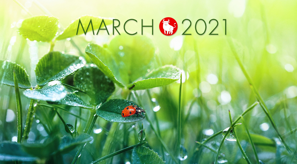 march-landing2021.jpg