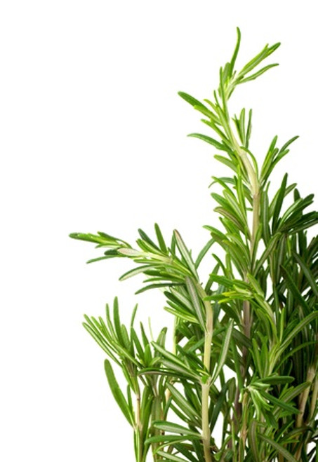 Whole Herb Rosemary (Fused) Olive Oil