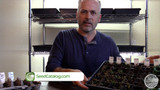 5 Reasons Your Seeds Don't Germinate