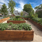 Winter Garden Project: Building Raised Beds (5 Pro Tips)