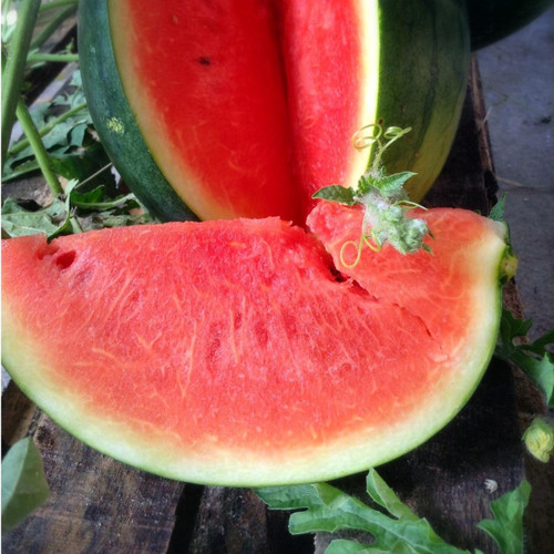 SeedCatalog Black Diamond Watermelon Seeds