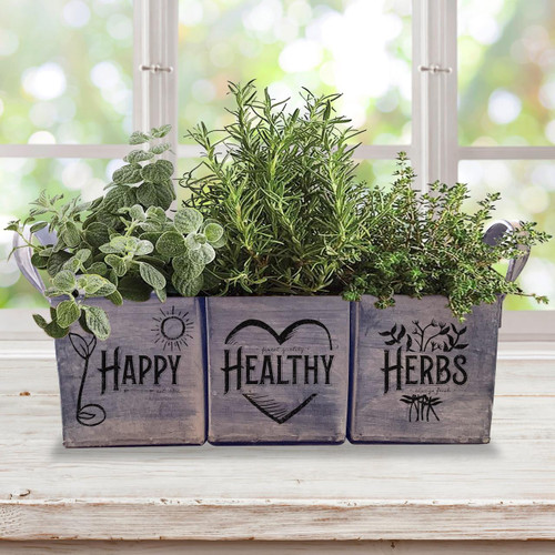 SeedCatalog Complete Indoor Herb Garden Kit