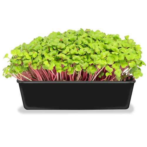 SeedCatalog Microgreens Kit