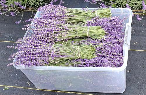 Lavender Flower Bundles