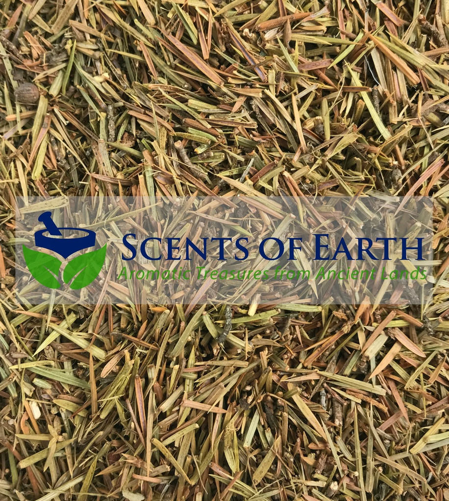 Juniper Tips (Juniperus communis) - Albania