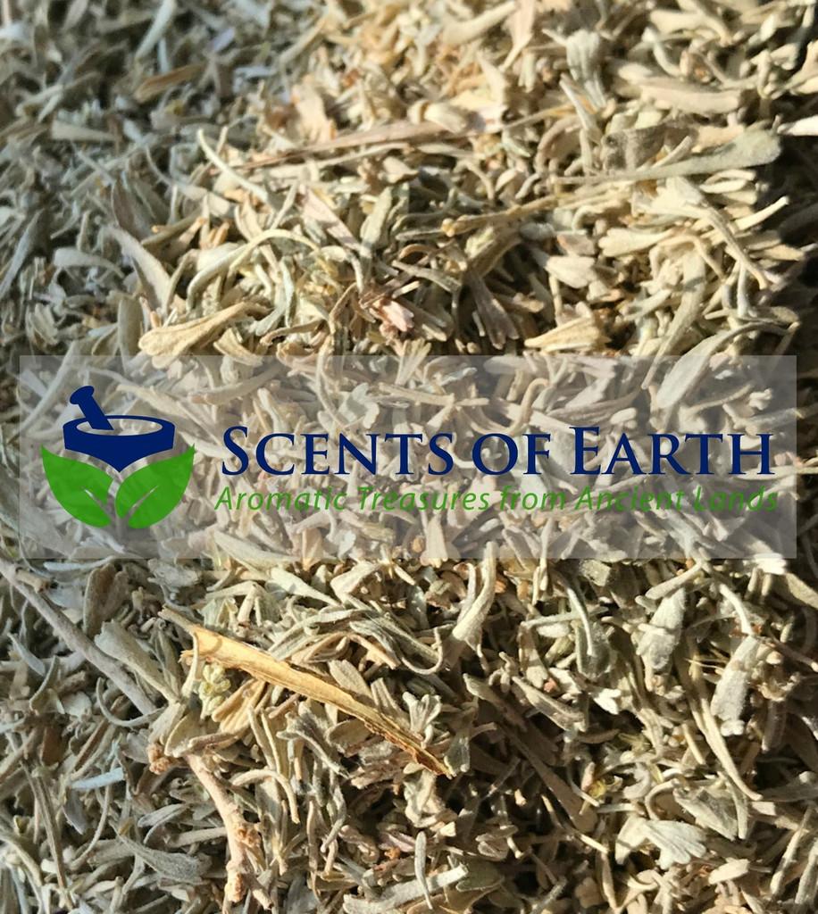 Sage - High Desert  (Artemisia tridentata) - Western USA