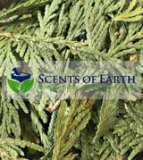 Cedar Leaf (Libocedrus decurrens) - United States