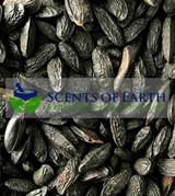 Tonka Beans (Dipteryx odorata) - Venezuela