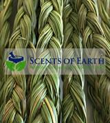 Mini Mama's Sweet Grass Braid (Heirochloe odorata) - USA