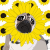 Gray & Yellow Sunflower Pug Print