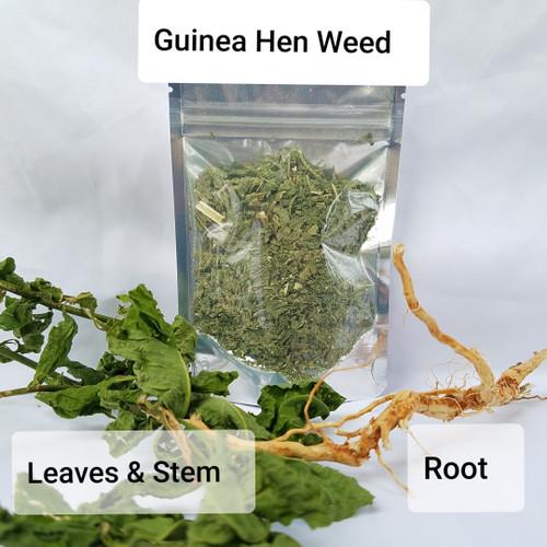 Guinea Hen root & leaves