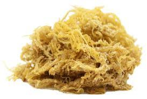 Whole Leaf Gold Sea Moss 1 lb -16 Oz
