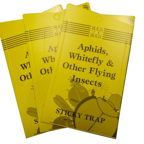 STICKY FLY TRAPS YELLOW