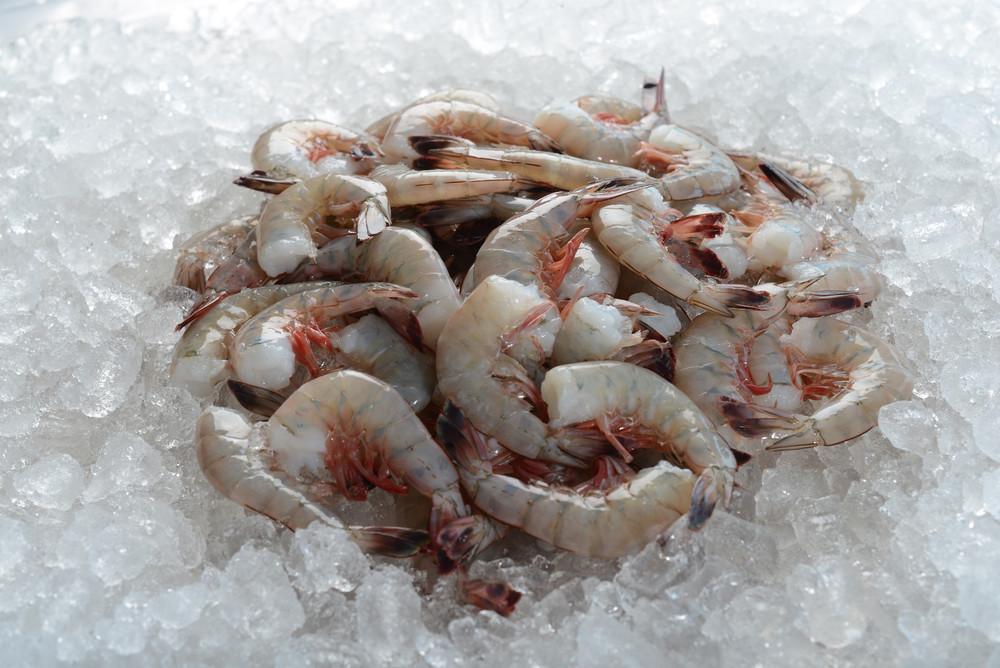 Colossal Gulf white shrimp frozen on ice.