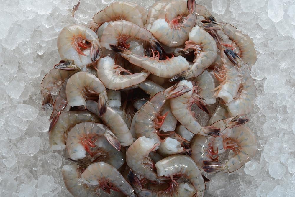 E-Z-peel shrimp frozen on ice.