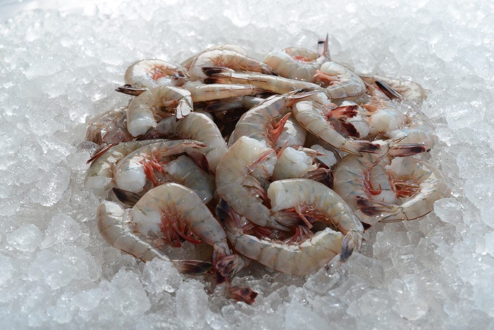 Raw extra large 31-40 count white headless wild-caught USA American Gulf shrimp