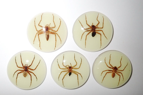 Insect Cabochon Ghost Spider Specimen 38 mm Round Glow 5 pieces Lot