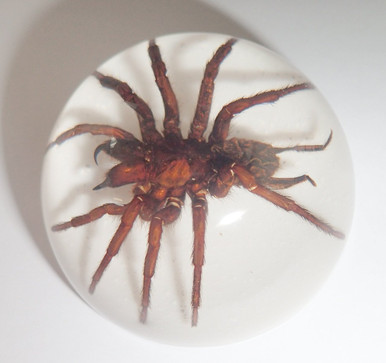 Spider Insect Specimens In Lucite Paperweight Acrylic Crafts