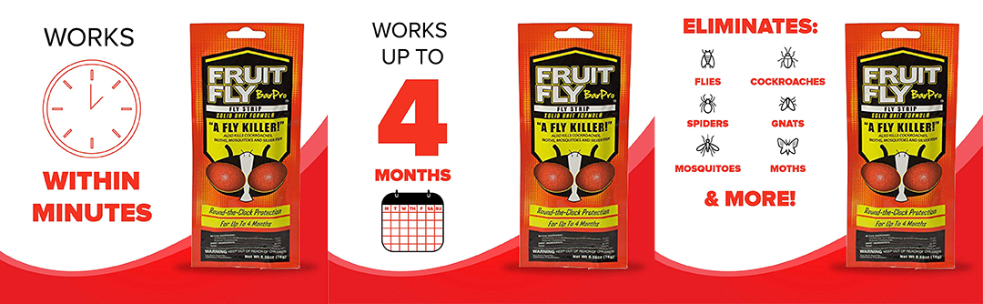 Fruit Fly Bar Pro eliminates flies cockroaches and more